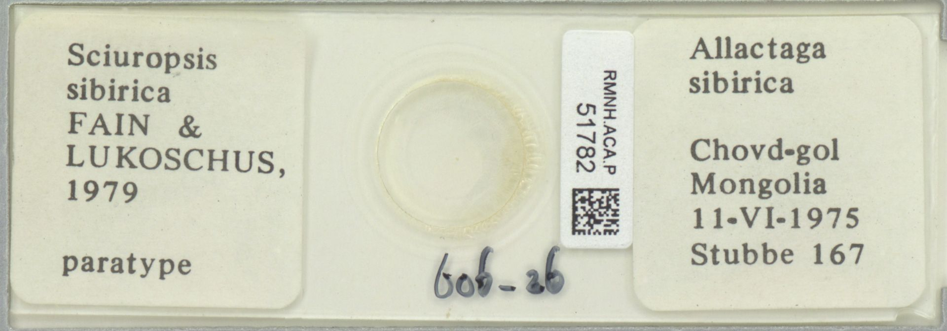 RMNH.ACA.P.51782 | Sciuropsis sibirica Fain & Lukoschus, 1979