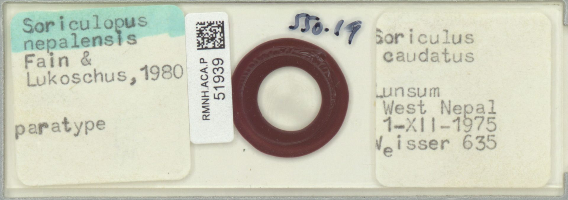 RMNH.ACA.P.51939 | Soriculopus nepalensis Fain & Lukoschus 1980