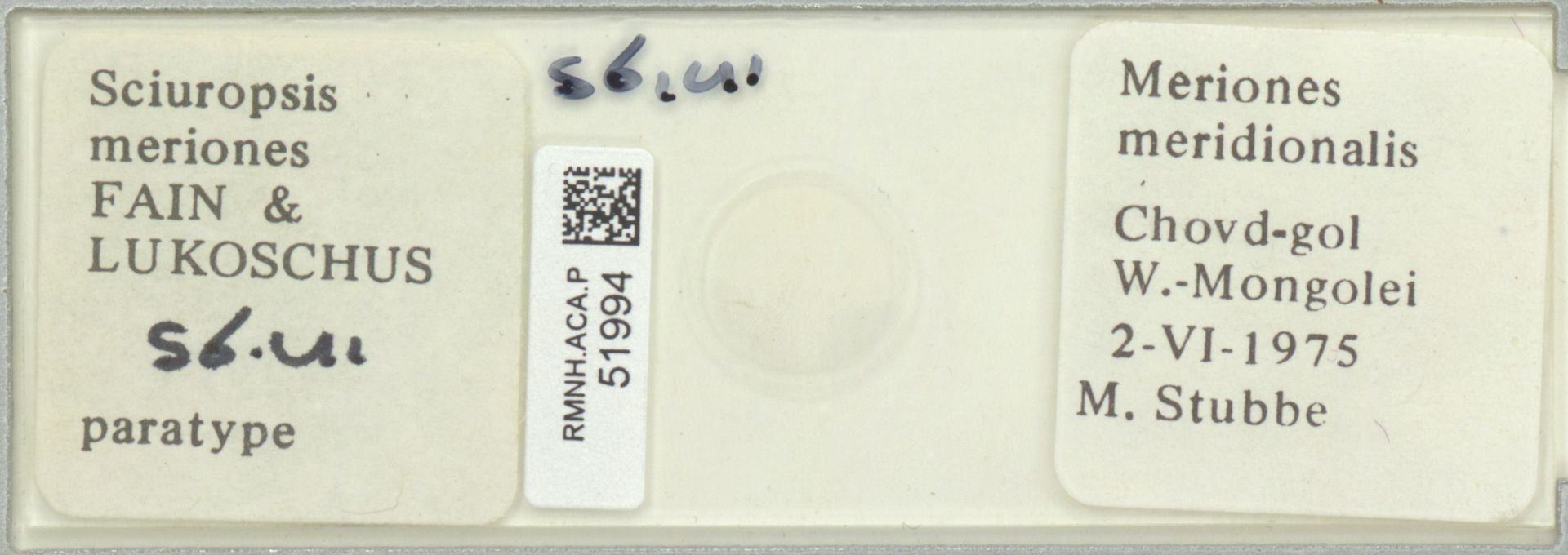 RMNH.ACA.P.51994 | Sciuropsis meriones Fain & Lukoschus