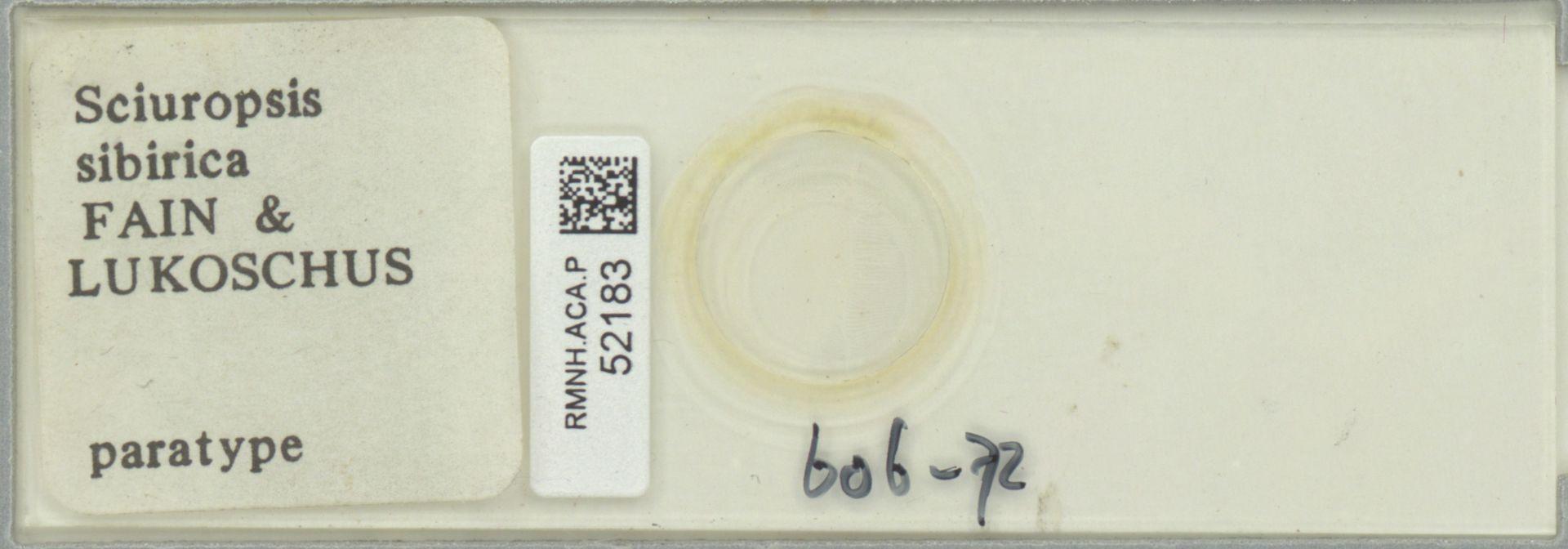 RMNH.ACA.P.52183   Sciuropsis sibirica Fain & Lukoschus