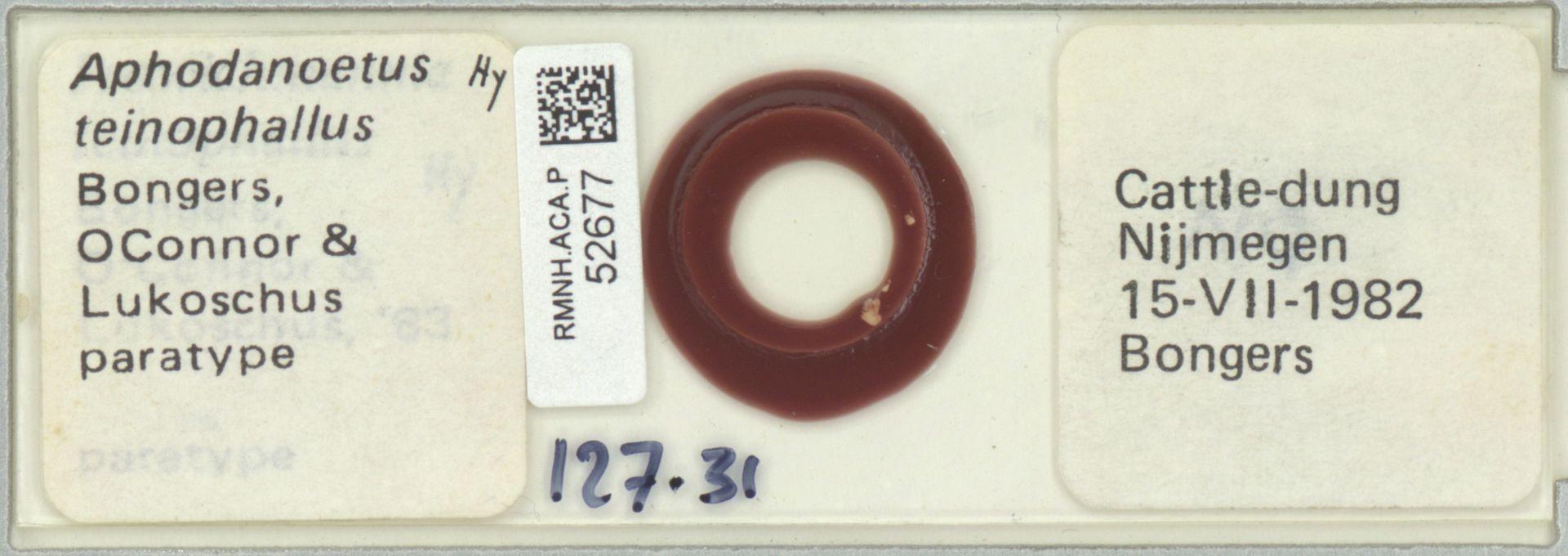 RMNH.ACA.P.52677 | Aphodanoetus teinophallus Bongers, OConnor & Lukoschus