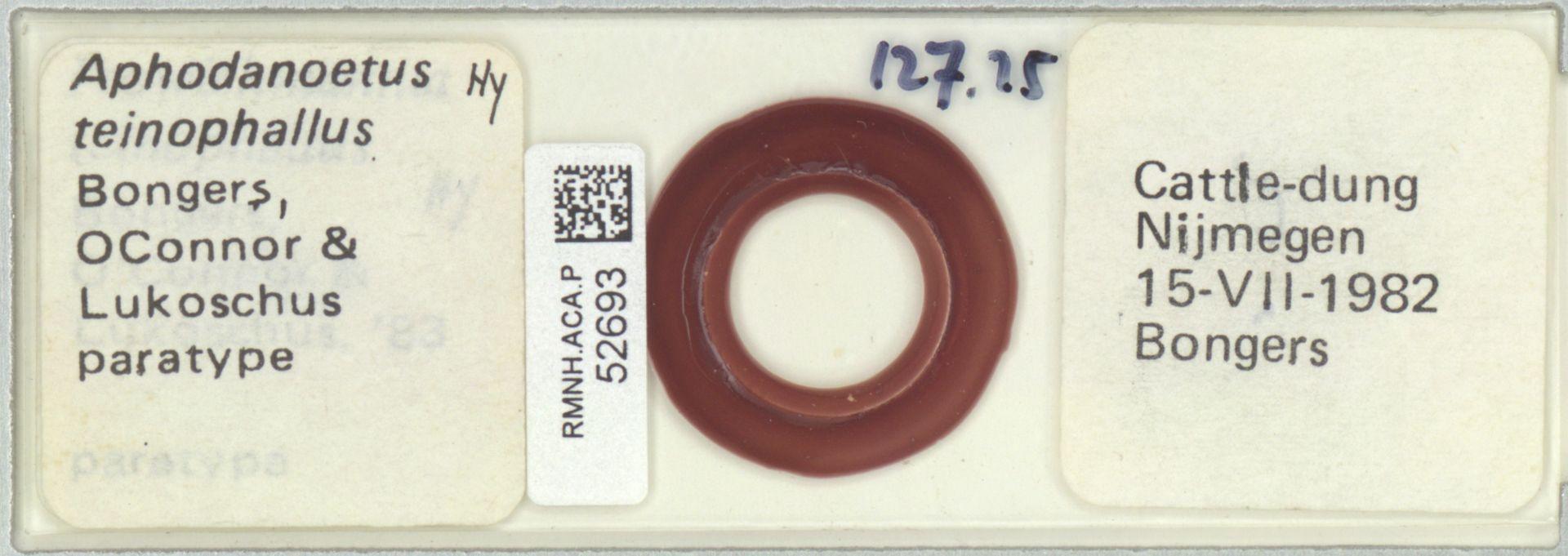 RMNH.ACA.P.52693 | Aphodanoetus teinophallus Bongers, OConnor & Lukoschus