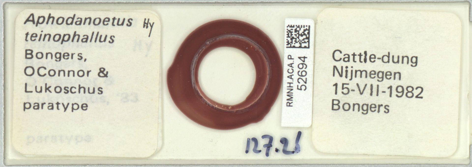 RMNH.ACA.P.52694   Aphodanoetus teinophallus Bongers, OConnor & Lukoschus