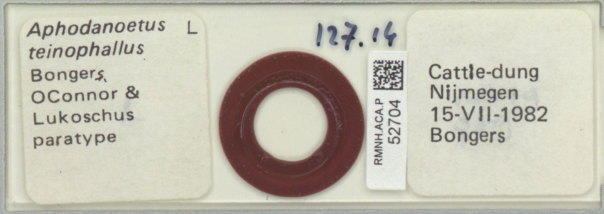 RMNH.ACA.P.52704 | Aphodanoetus teinophallus Bongers, OConnor & Lukoschus