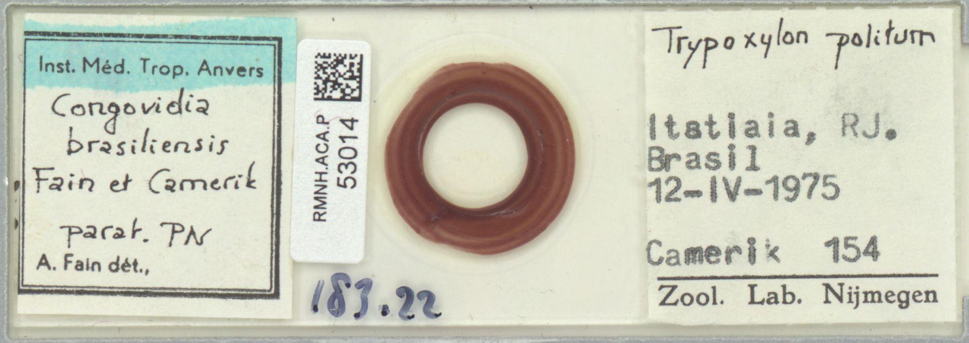 RMNH.ACA.P.53014 | Congovidia brasiliensis Fain et Camerik