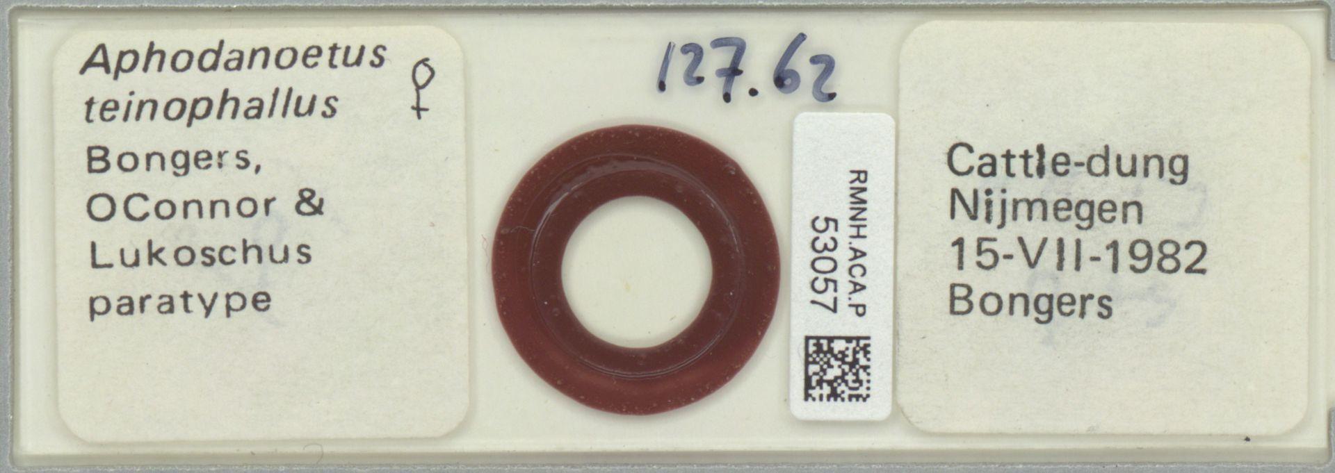RMNH.ACA.P.53057 | Aphodanoetus teinophallus Bongers, OConnor & Lukoschus