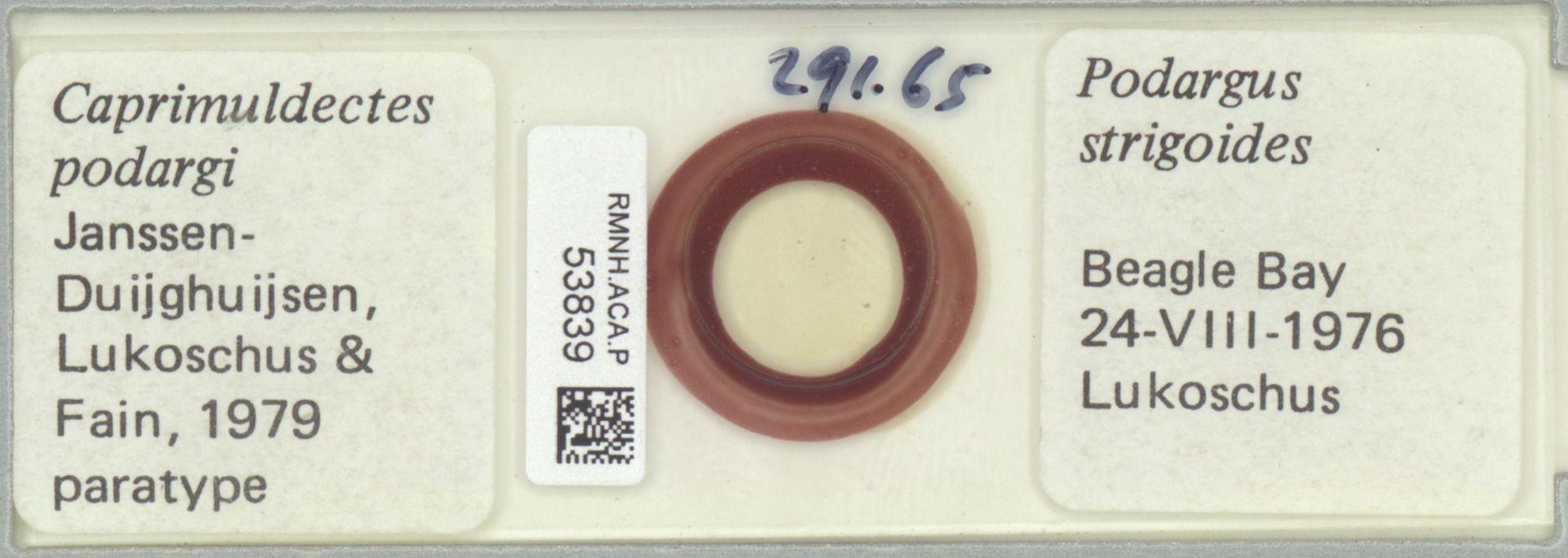 RMNH.ACA.P.53839 | Caprimuldectes podargi Janssen-Duijghuijsen, Lukoschus & Fain 1979
