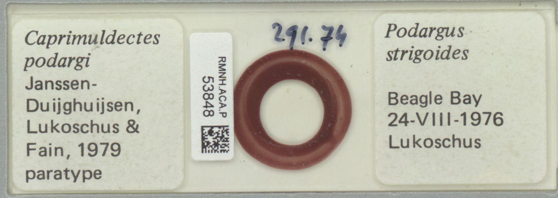 RMNH.ACA.P.53848   Caprimuldectes podargi Janssen-Duijghuijsen, Lukoschus & Fain, 1979