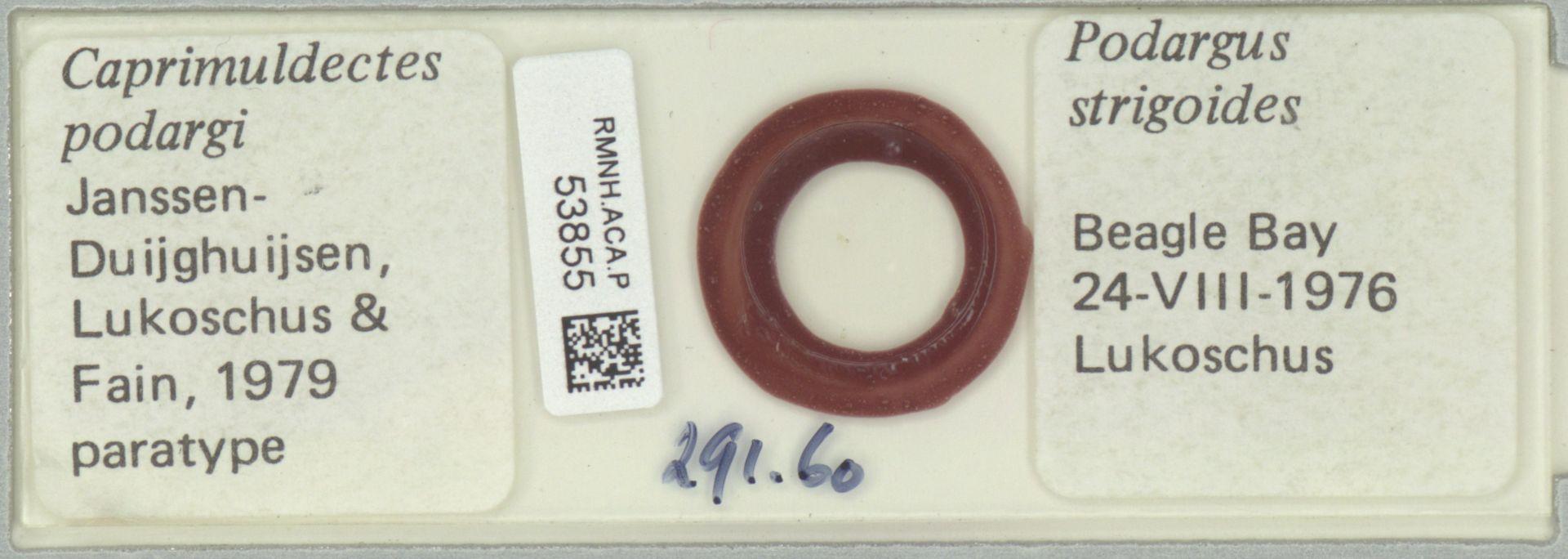 RMNH.ACA.P.53855 | Caprimuldectes podargi Janssen-Duijghuijsen, Lukoschus & Fain, 1979