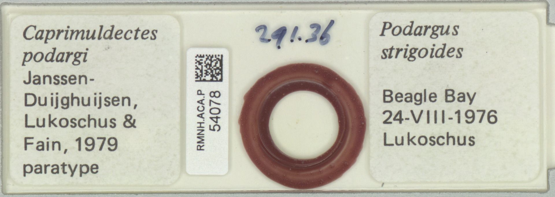 RMNH.ACA.P.54078   Caprimuldectes podargi Janssen Duijghuisen, Lukoschus & Fain, 1979