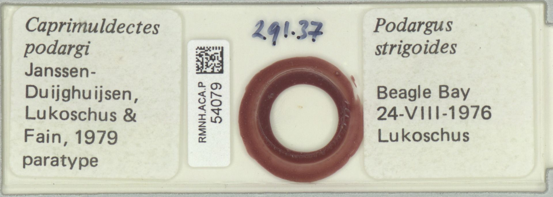 RMNH.ACA.P.54079 | Caprimuldectes podargi Janssen Duijghuisen, Lukoschus & Fain, 1979