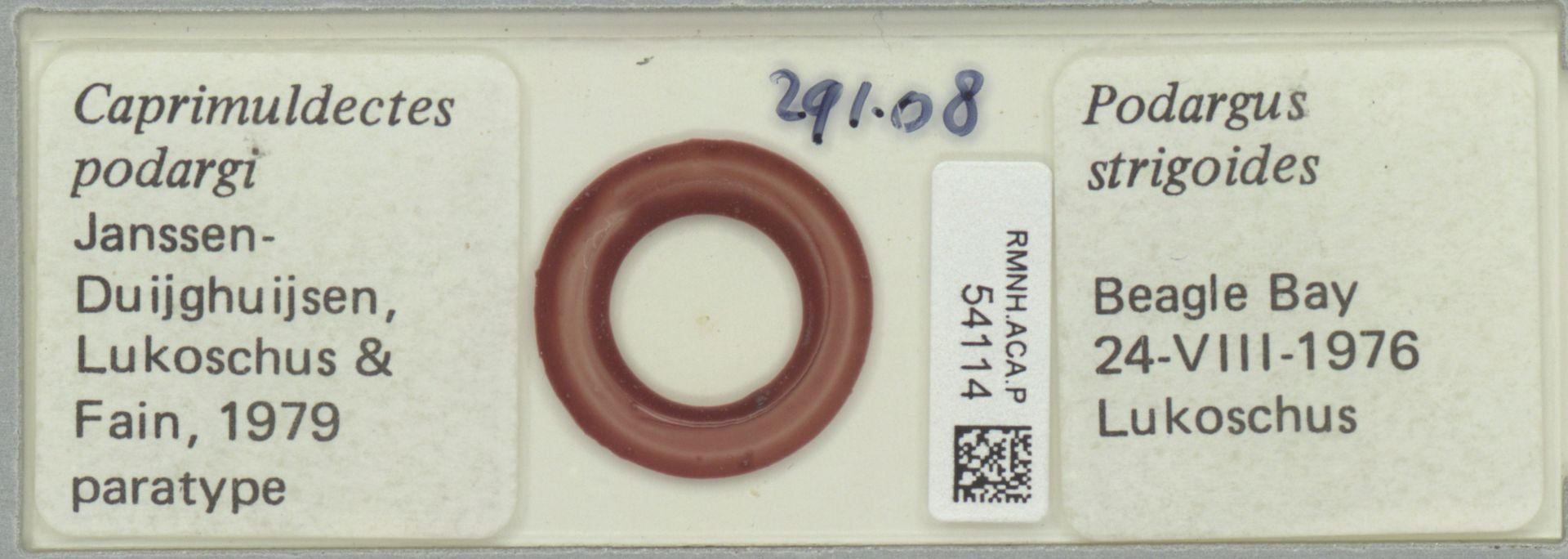 RMNH.ACA.P.54114 | Caprimuldectes podargi Janssen Duijghuijsen, Lukoschus & Fain, 1979