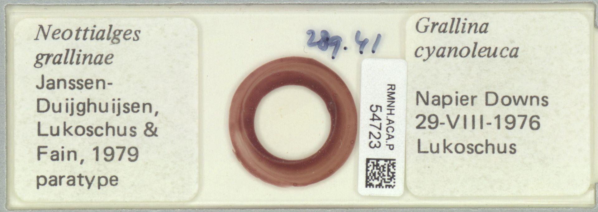 RMNH.ACA.P.54723 | Neottialges grallinae Janssen Duijghuijsen, Lukoschus & Fain, 1979