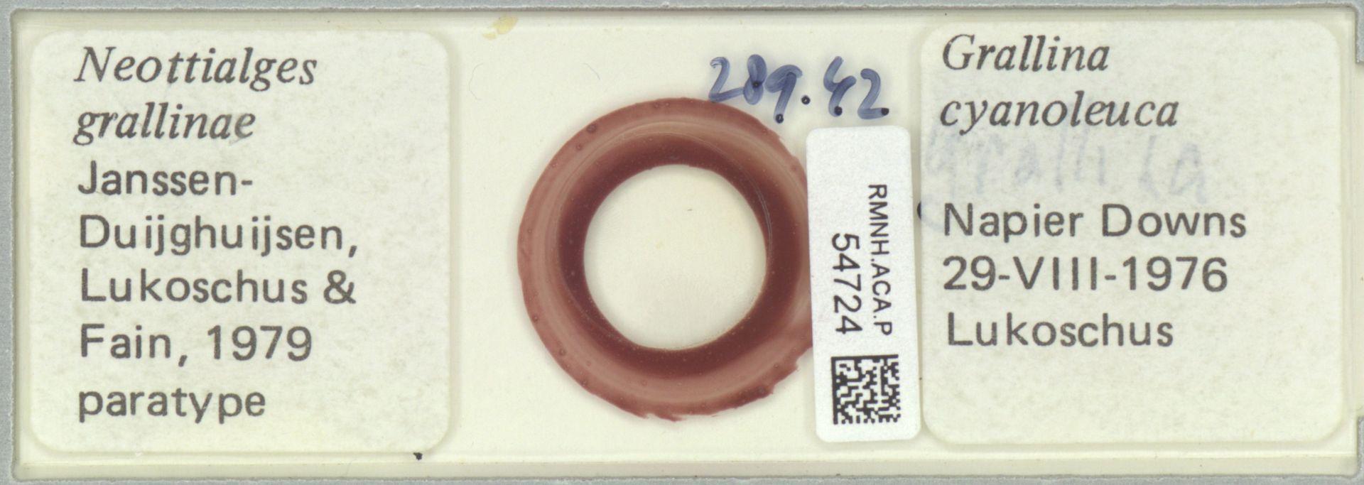 RMNH.ACA.P.54724 | Neottialges grallinae Janssen-Duijghuijsen, Lukoschus & Fain, 1979
