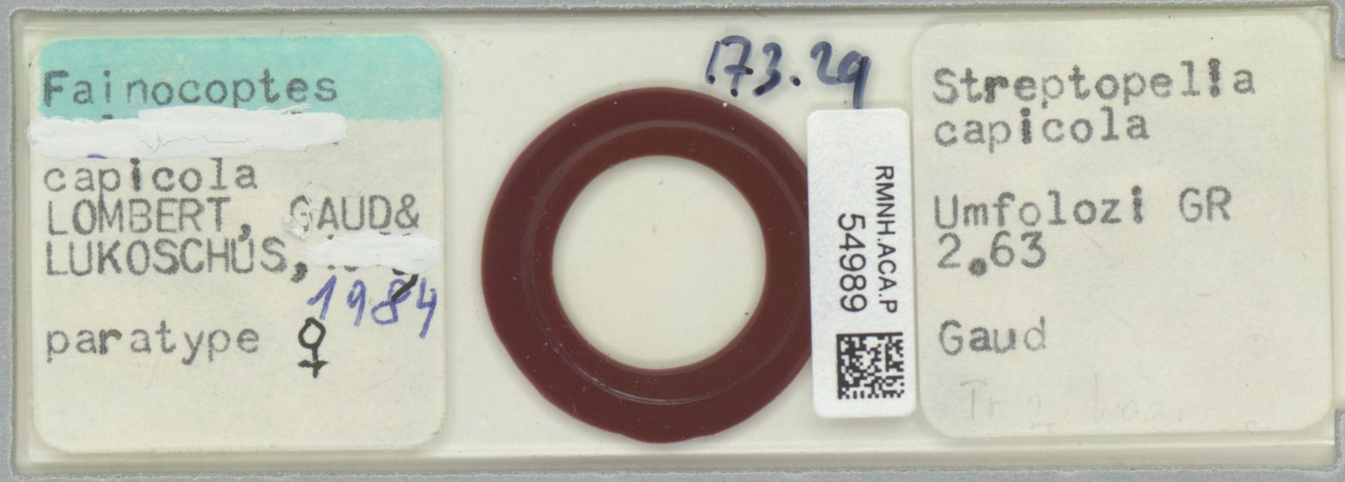RMNH.ACA.P.54989 | Fainocoptes capicola Lombert, Gaud & Lukoschus, 1984
