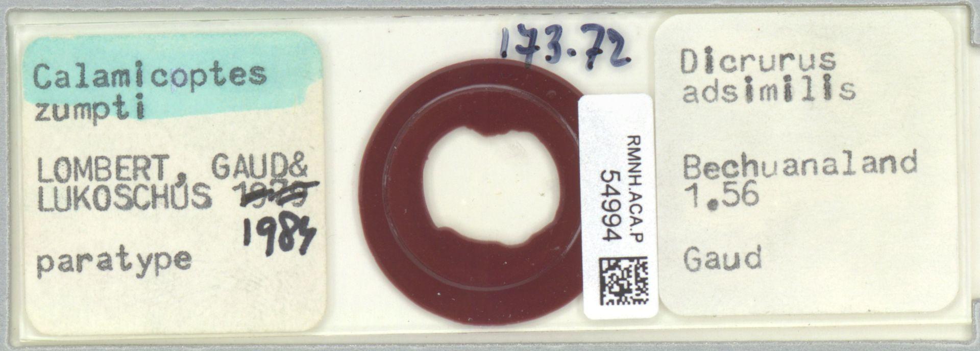 RMNH.ACA.P.54994 | Calamicoptes zumpti Lombert, Gaud & Lukoschus, 1984