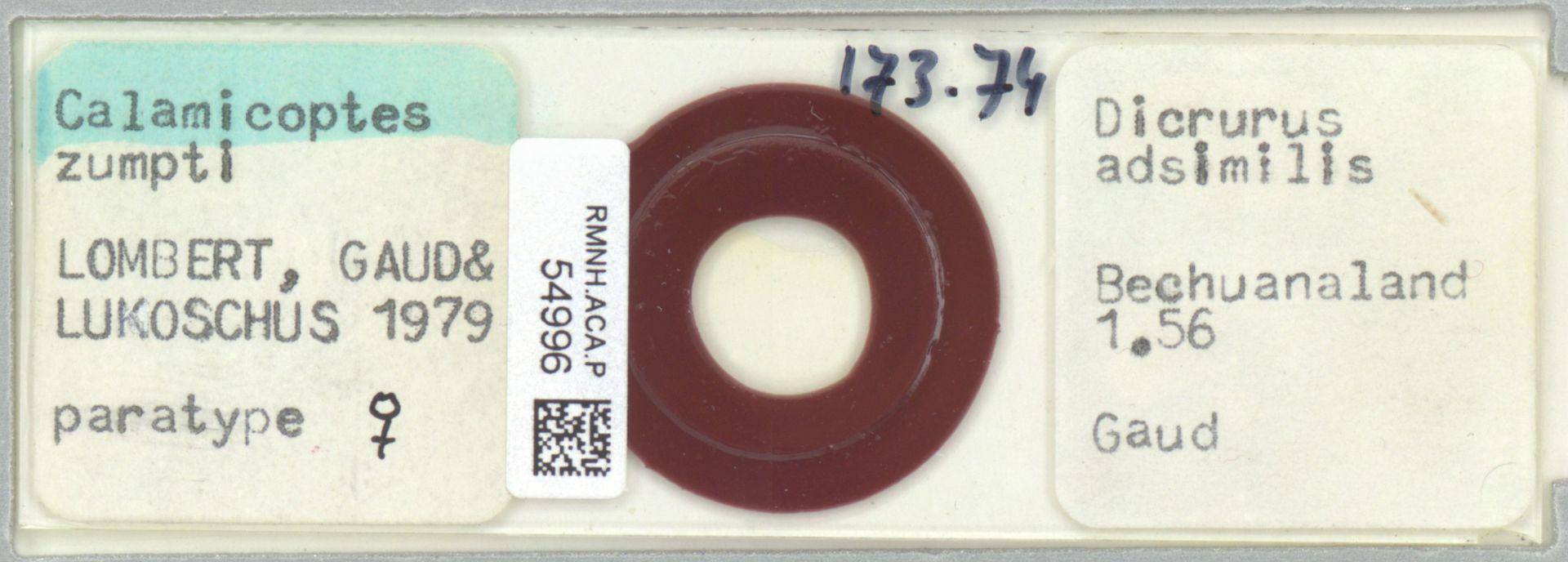 RMNH.ACA.P.54996 | Calamicoptes zumpti Lombert, Gaud & Lukoschus, 1979