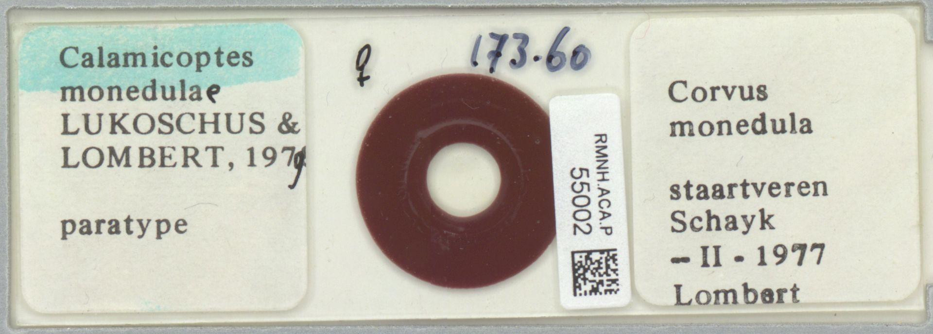 RMNH.ACA.P.55002 | Calamicoptes monedulae Lukoschus & Lombert, 1979