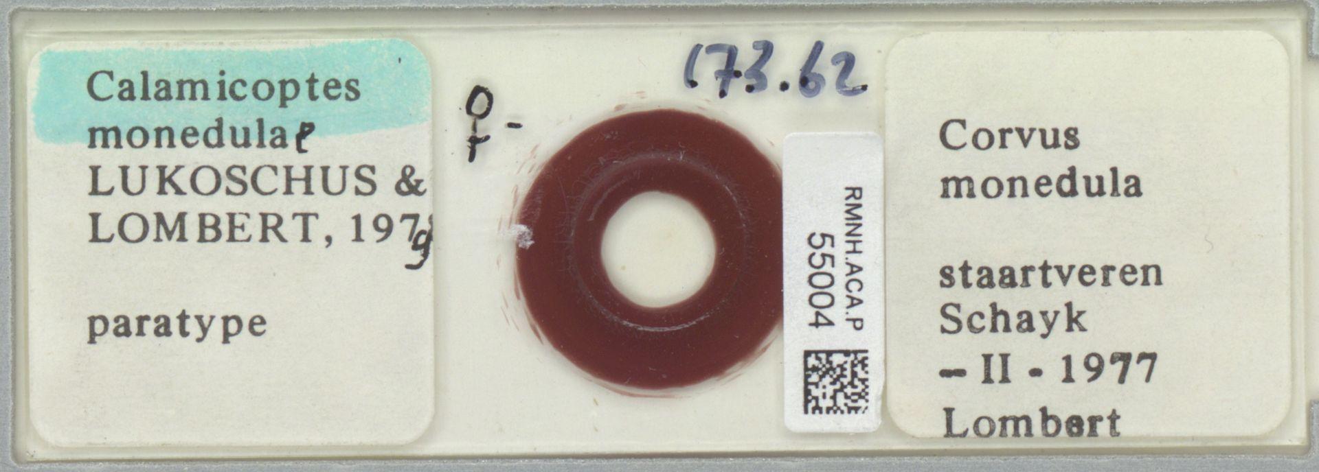 RMNH.ACA.P.55004 | Calamicoptes monedulae Lukoschus & Lombert, 1979