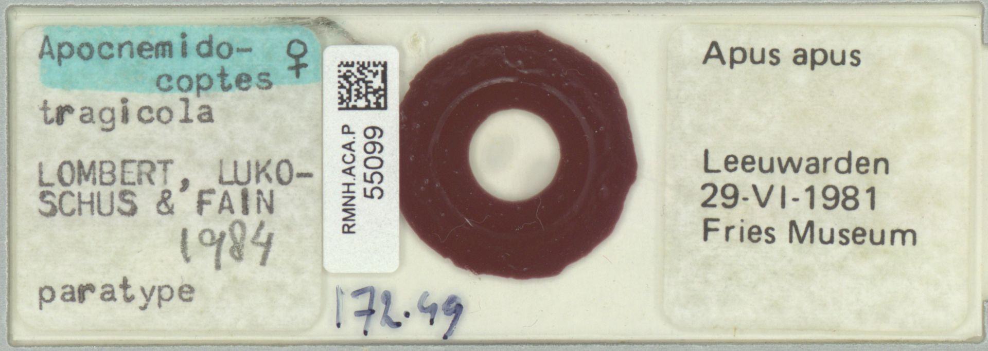RMNH.ACA.P.55099 | Apocnemidocoptes tragicola Lombert, Lukoschus & Fain, 1984