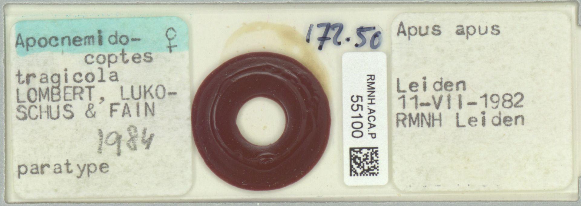 RMNH.ACA.P.55100 | Apocnemidocoptes tragicola Lombert, Lukoschus & Fain 1984