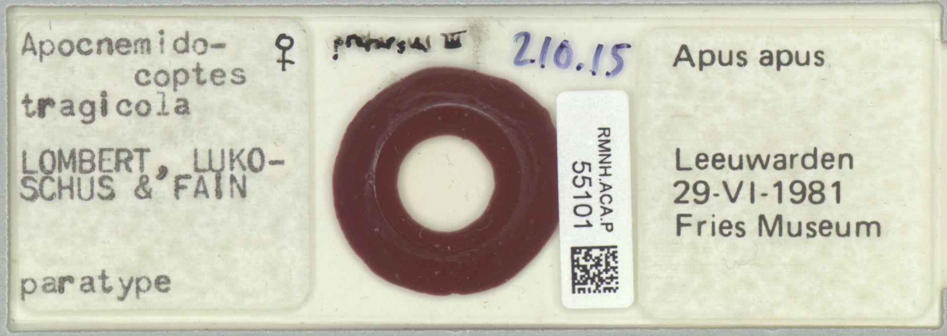 RMNH.ACA.P.55101 | Apocnemidocoptes tragicola Lombert, Lukoschus & Fain