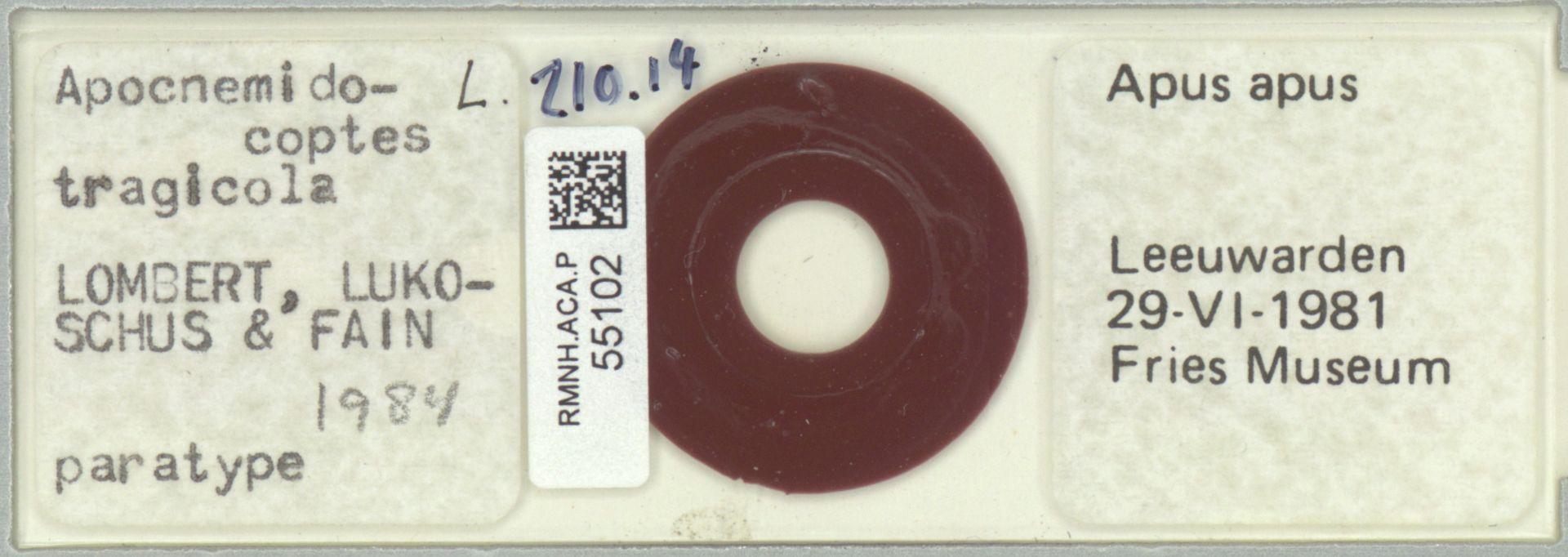 RMNH.ACA.P.55102 | Apocnemidocoptes tragicola Lombert, Lukoschus & Fain, 1984