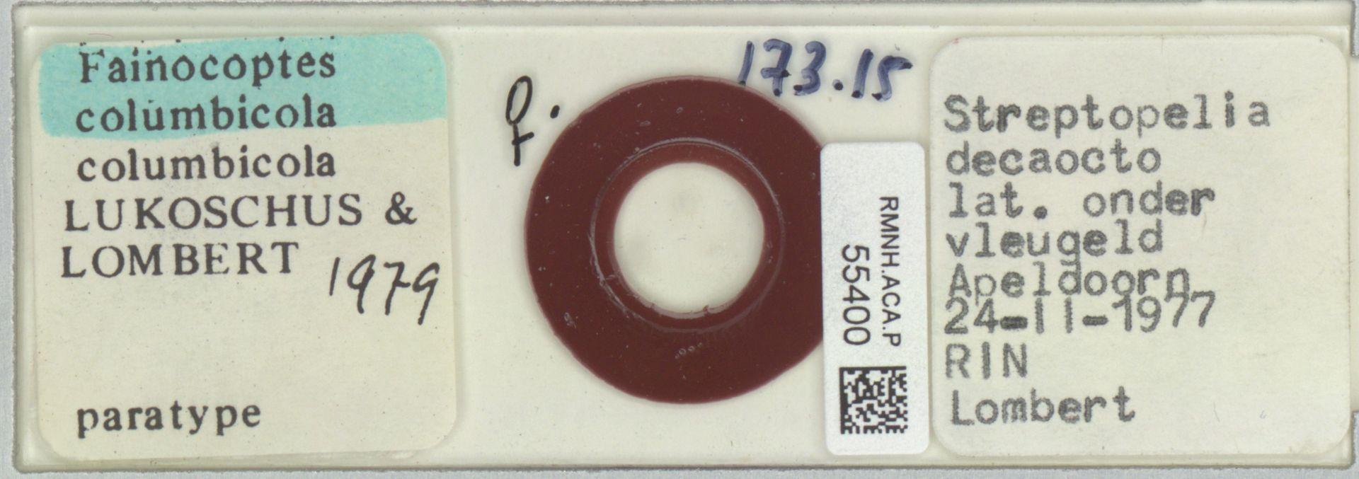 RMNH.ACA.P.55400 | Fainocoptes colombicola colombicola Lukoschus & Lombert 1979