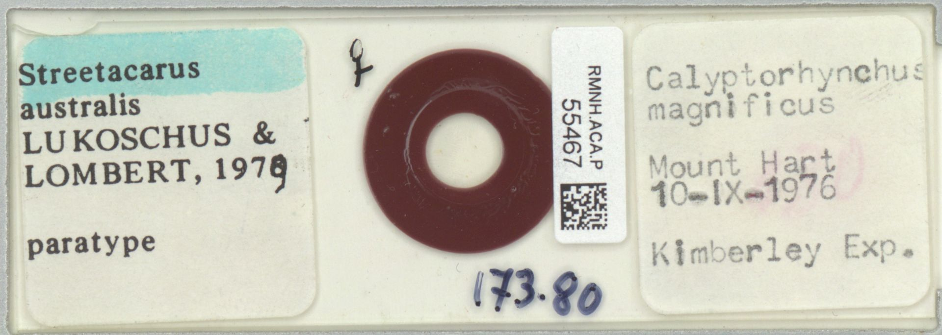 RMNH.ACA.P.55467 | Streetacarus australis lukoschus & Lombert 1979