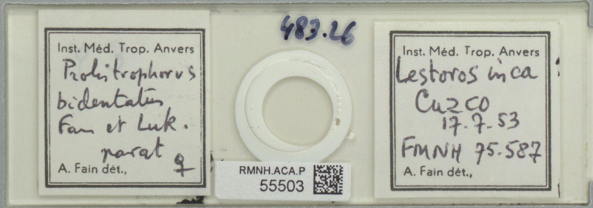RMNH.ACA.P.55503 | Prolistrophorus bidentatus Fain et Luk.
