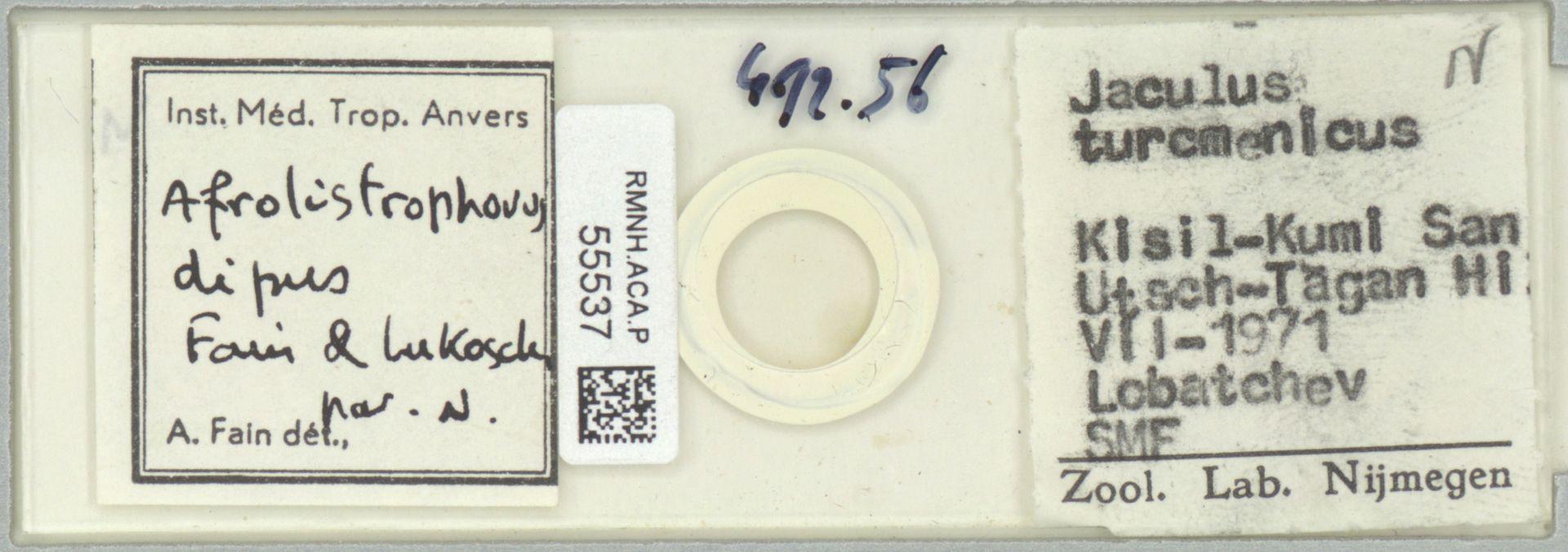 RMNH.ACA.P.55537 | Afrolistrophorus dipus Fain & Lukoschus