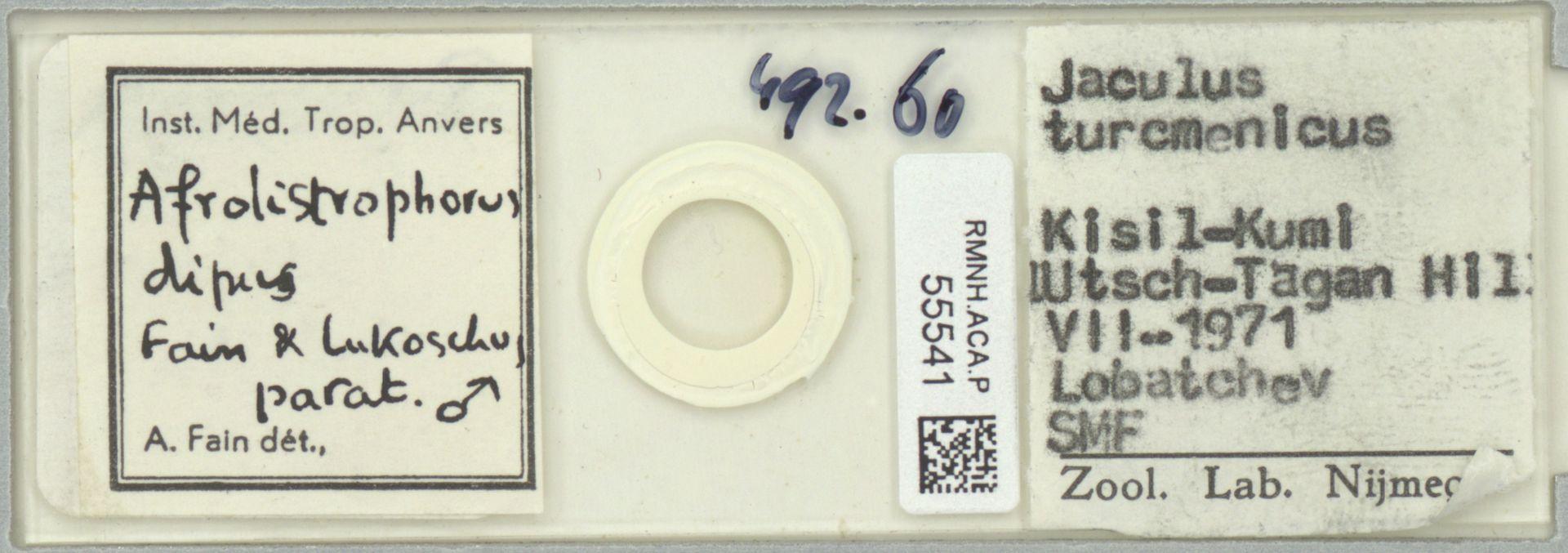 RMNH.ACA.P.55541 | Afrolistrophorus dipus Fain & Lukoschus