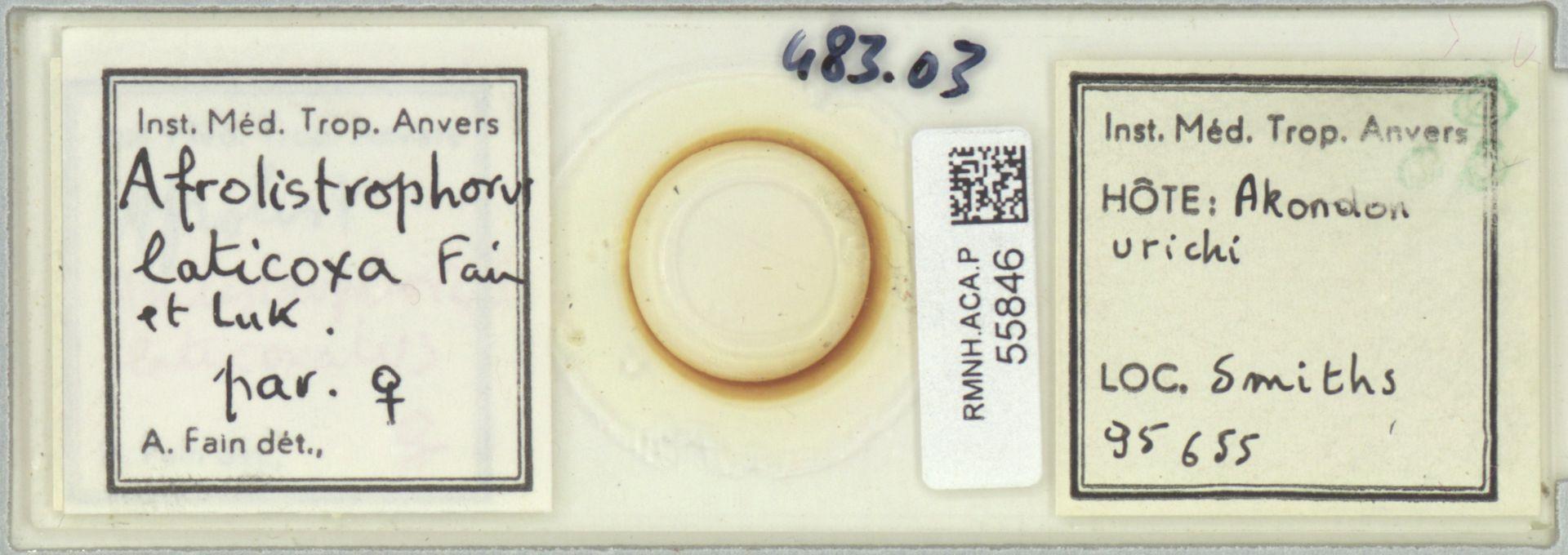 RMNH.ACA.P.55846 | Afrolistrophorus laticoxa Fain et Luk.