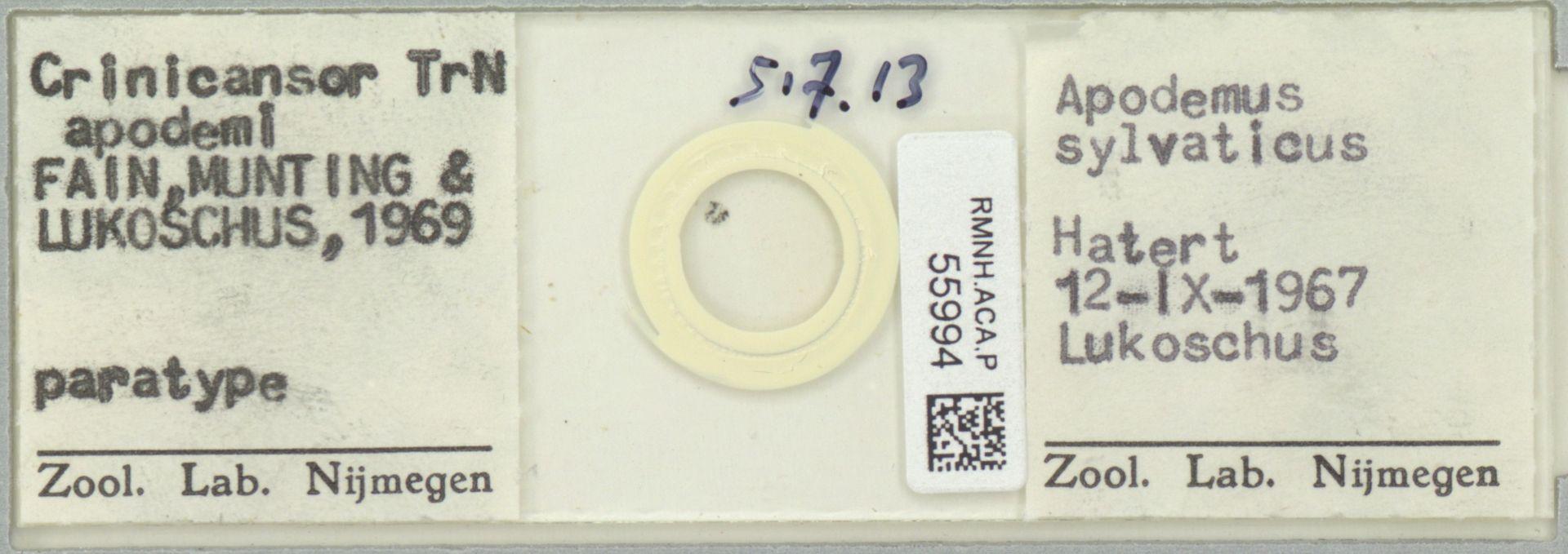 RMNH.ACA.P.55994 | Crinicansor apodemi Fain, Munting & Lukoschus, 1969