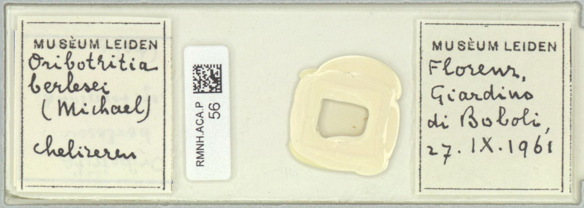 RMNH.ACA.P.56 | Oribotritia berlesi Michael, 1898