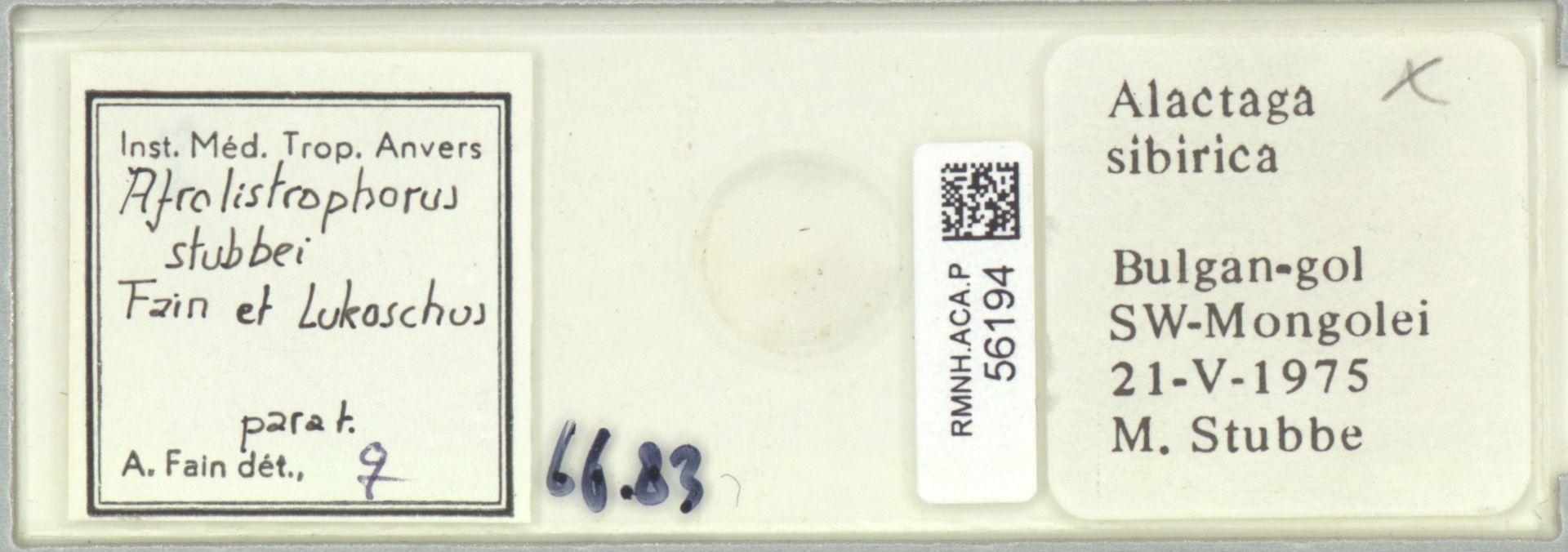 RMNH.ACA.P.56194 | Afrolistrophorus stubbei Fain et Lukoschus