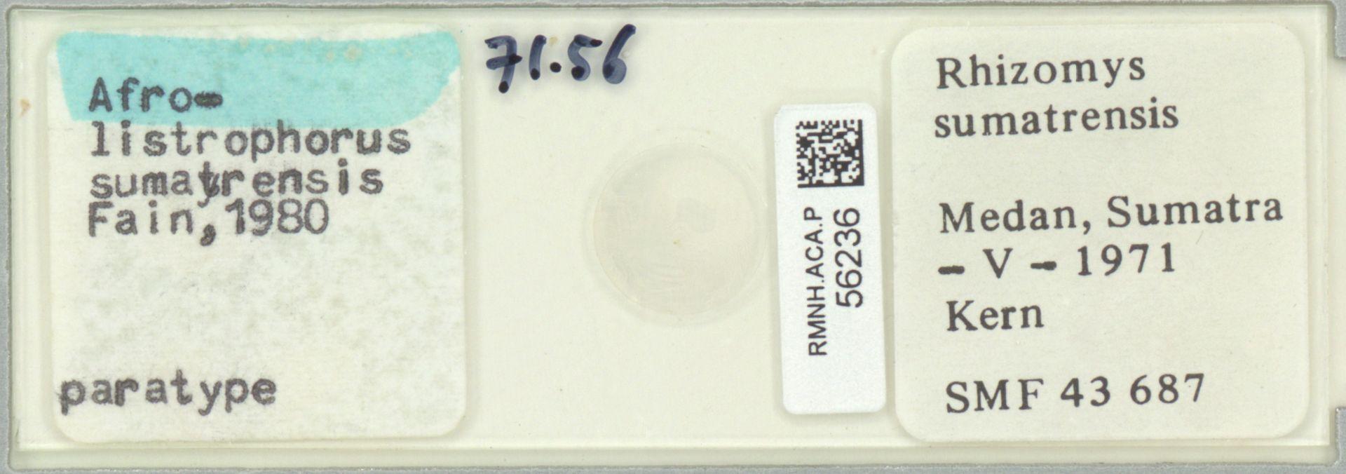 RMNH.ACA.P.56236 | Afrolistrophorus sumatrensis Fain 1980