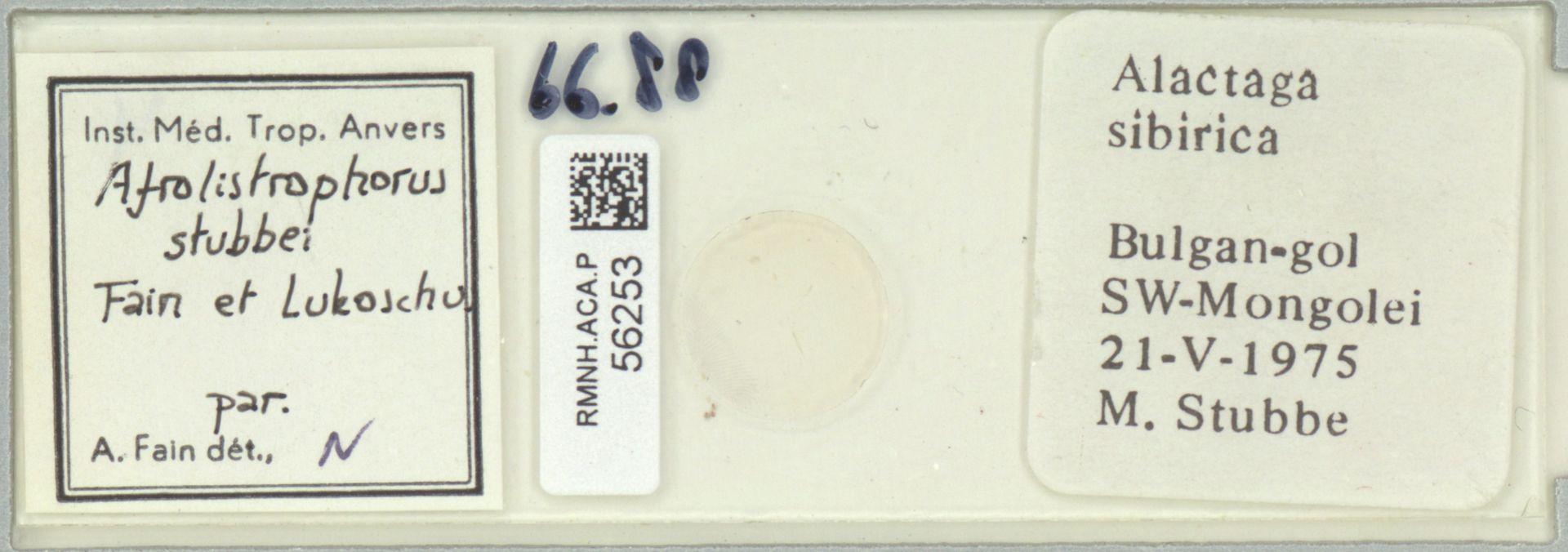 RMNH.ACA.P.56253   Afrolistrophorus stubbei Fain et Lukoschus