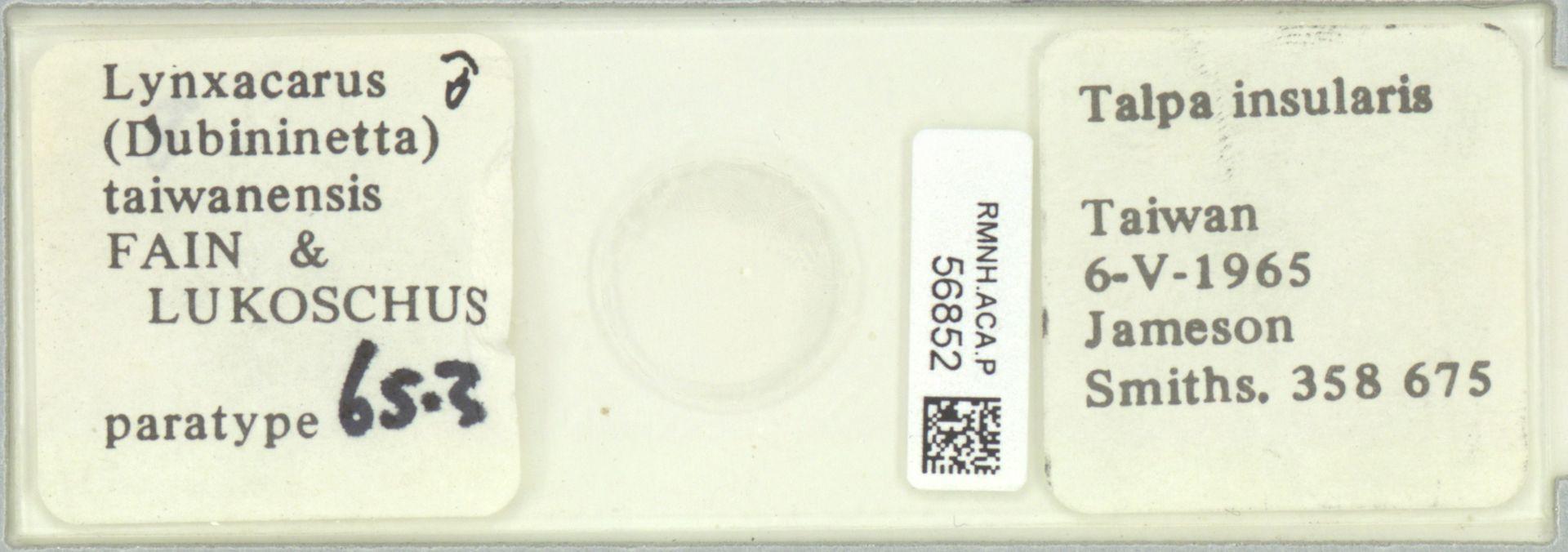 RMNH.ACA.P.56852 | Lynxacarus (Dubininetta) taiwanensis Fain & Lukoschus