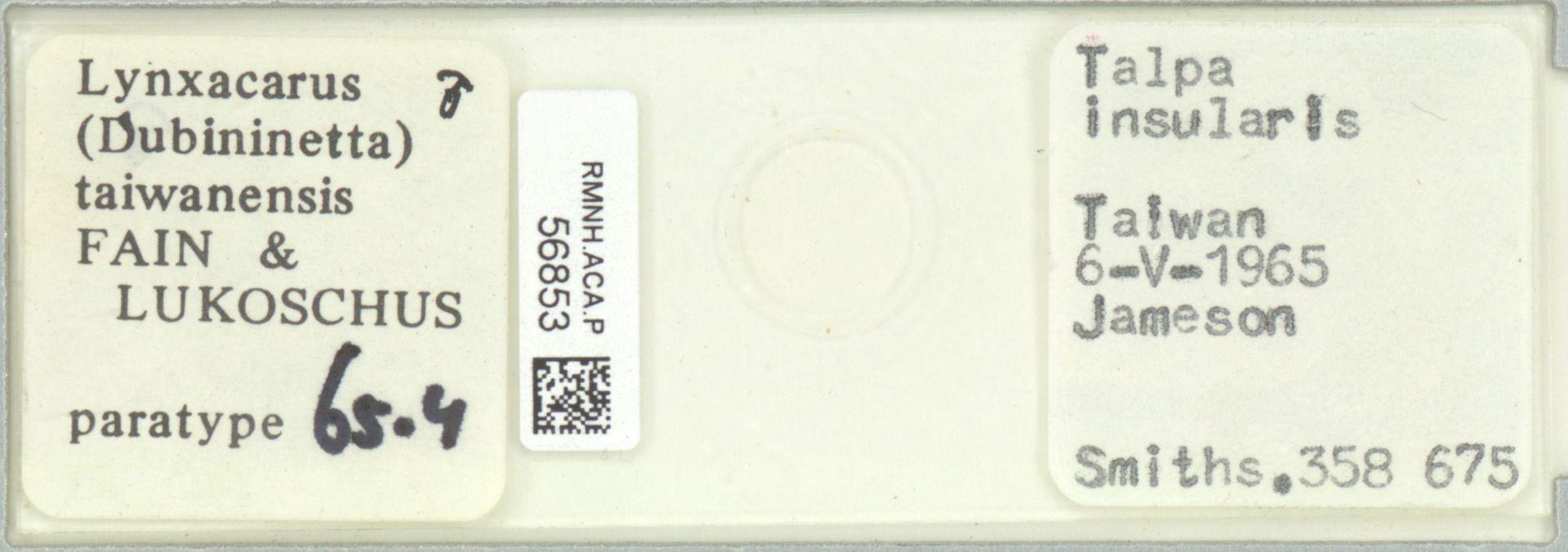 RMNH.ACA.P.56853 | Lynxacarus (Dubininetta) taiwanensis Fain & Lukoschus