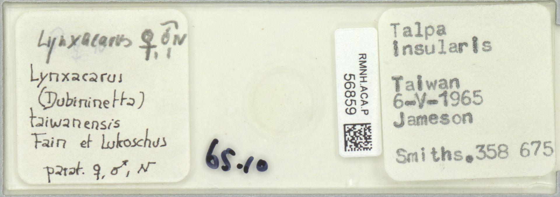 RMNH.ACA.P.56859 | Lynxacarus (Dubininetta) taiwanensis Fain et Lukoschus