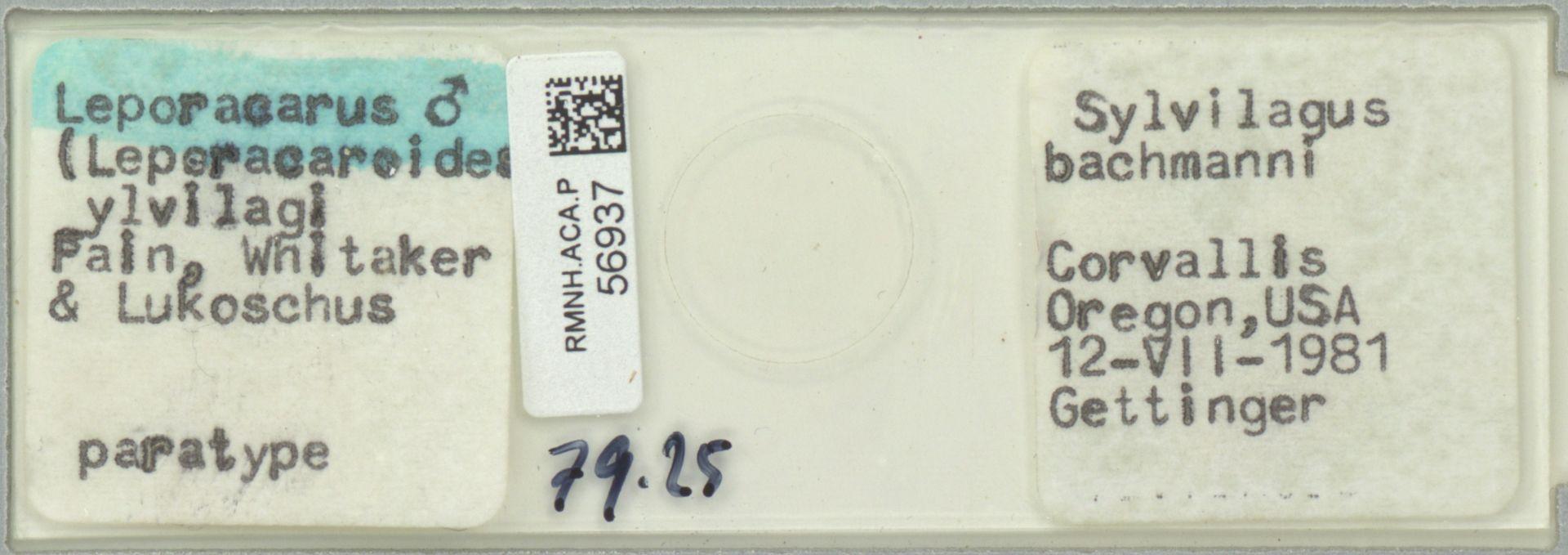 RMNH.ACA.P.56937 | Leporacarus (Leperacaroides) ylvilagi Fain, Whitaker & Lukoschus