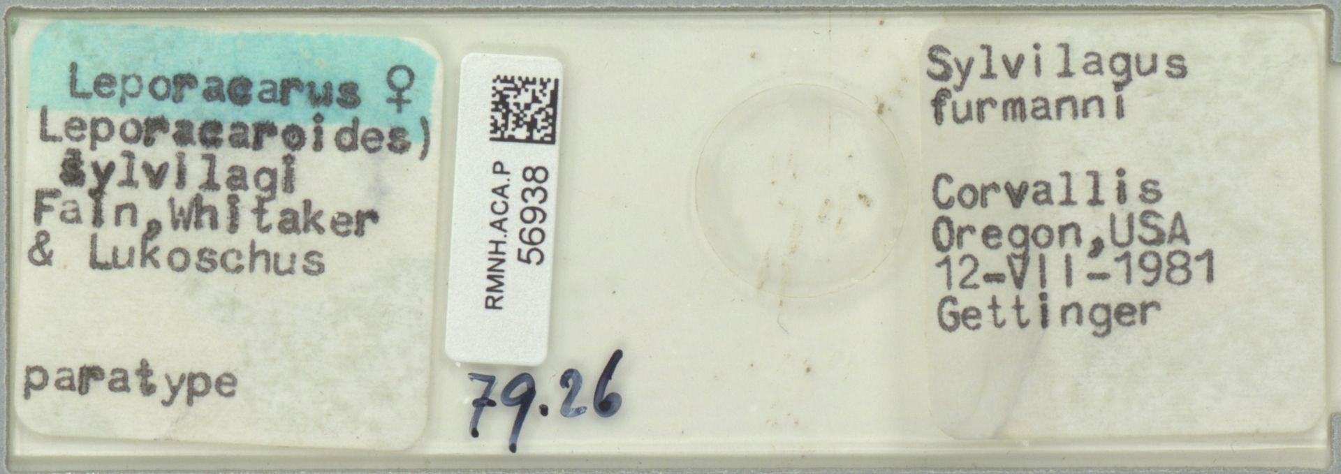 RMNH.ACA.P.56938 | Leporacarus (Leporacaroides) sylvilagi Fain, Whitaker & Lukoschus
