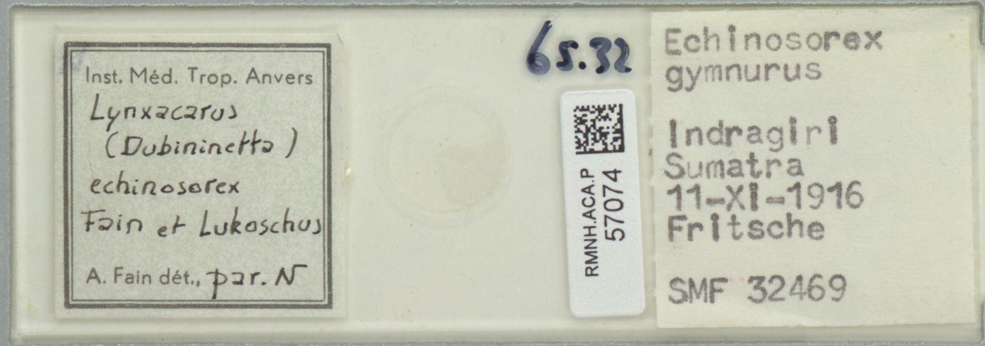 RMNH.ACA.P.57074 | Lynxacarus (Dubininetta) echinosorex Fain & Lukoschus