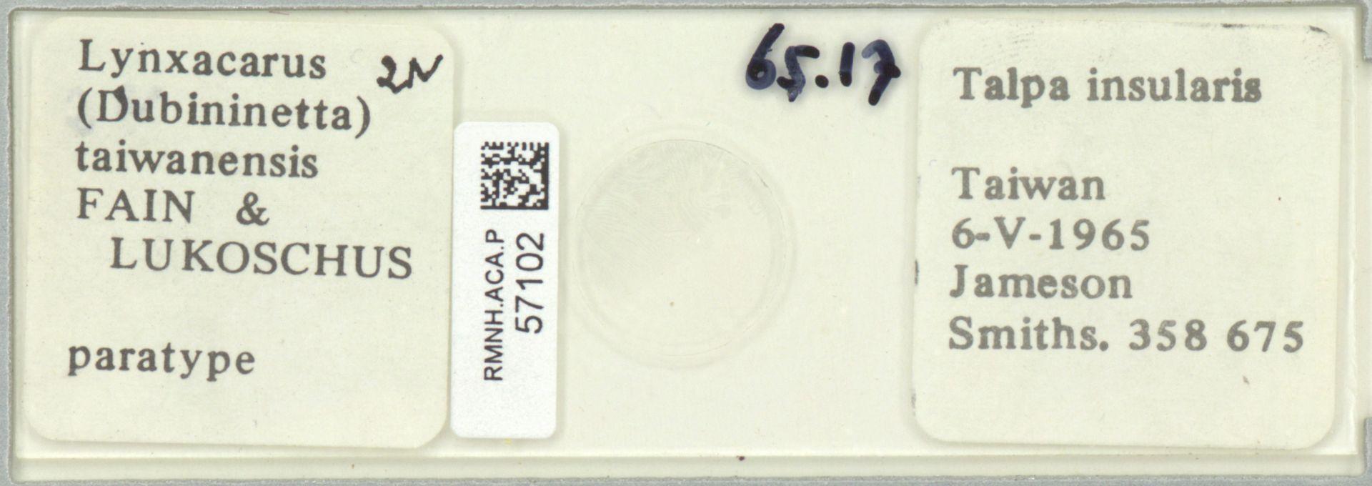 RMNH.ACA.P.57102 | Lynxacarus (Dubininetta) taiwanensis Fain & Lukoschus