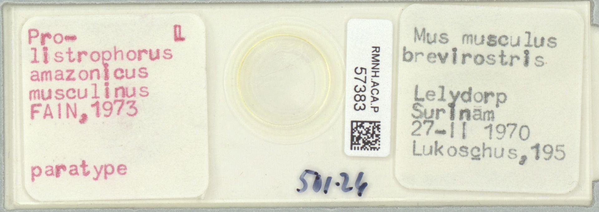 RMNH.ACA.P.57383   Prolistrophorus amazonicus musculinus Fain, 1973