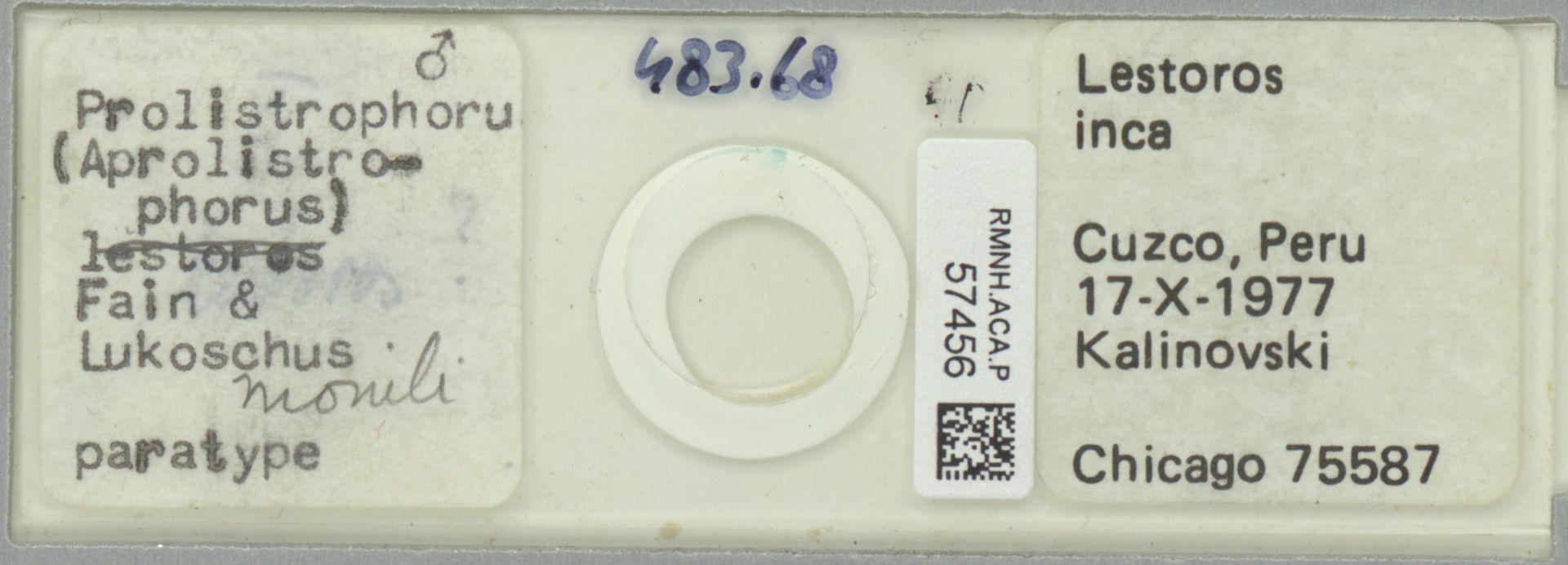 RMNH.ACA.P.57456 | Prolistrophorus (Aprolistrophorus) Fain & Lukoschus