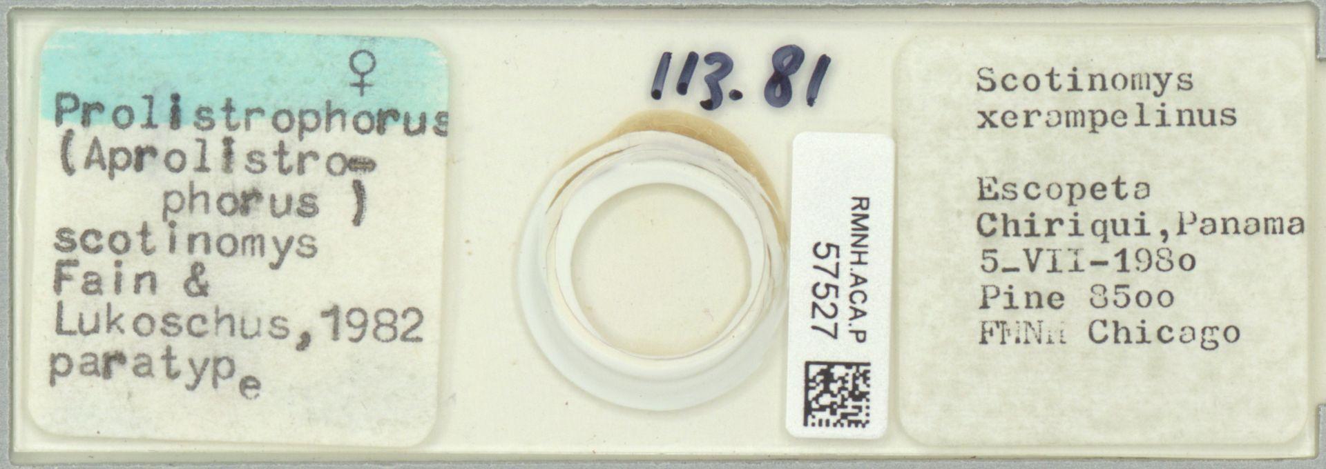 RMNH.ACA.P.57527 | Prolistrophorus (Aprolistrophorus) scotinomys Fain & Lukoschus, 1982