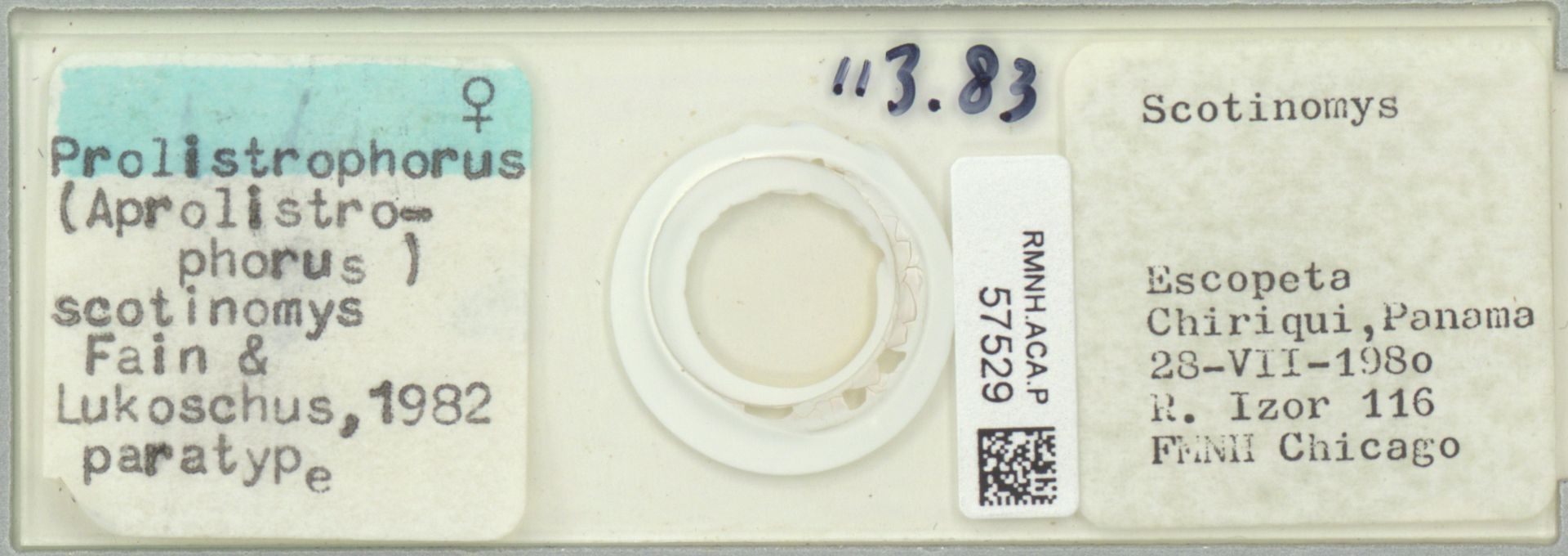 RMNH.ACA.P.57529 | Prolistrophorus (Aprolistrophorus) scotinomys Fain & Lukoschus, 1982