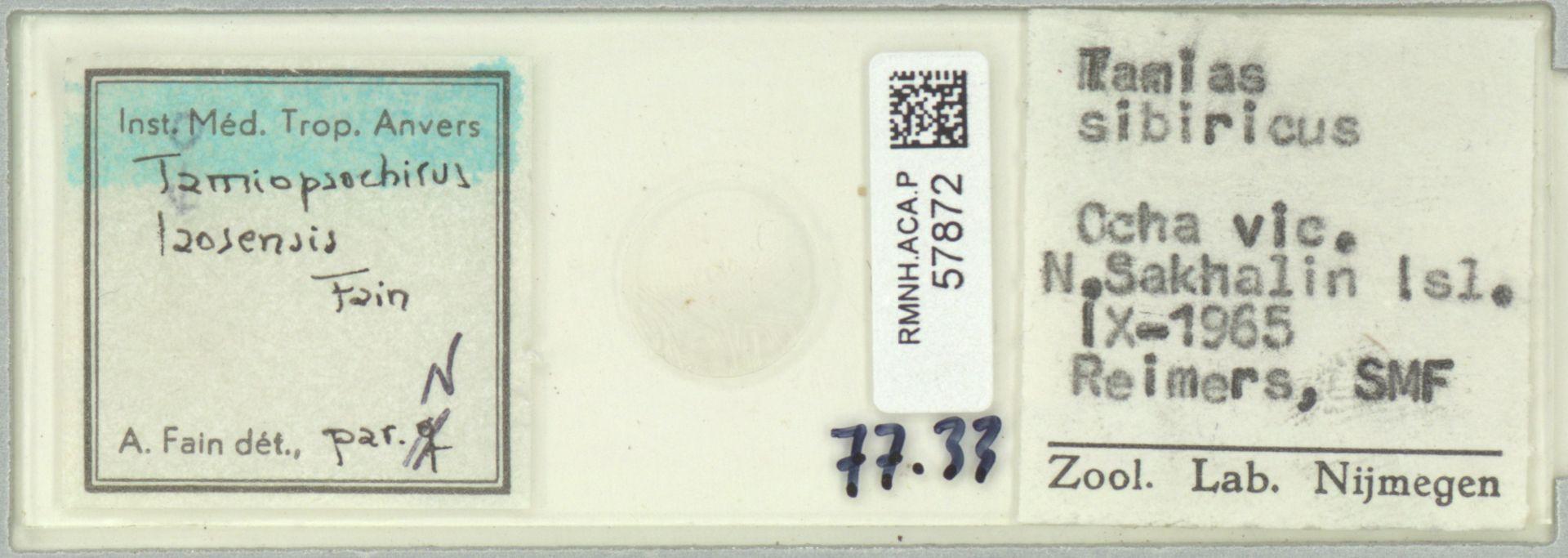 RMNH.ACA.P.57872 | Tamiopsochirus laosensis Fain